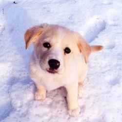 chien carnet sante