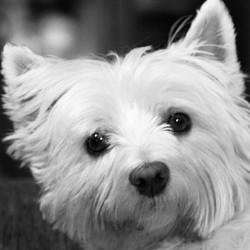 chien de race ou sans pedigree