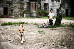 enfant peur du chien