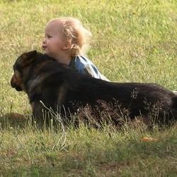 chien et enfant précautions à prendre
