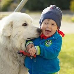 chien et enfant quelle race choisir