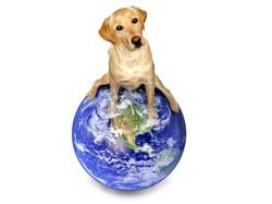 chien etranger