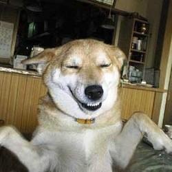 dog dancing chien danse