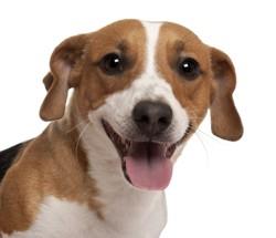 chien qui sourit