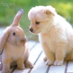 Site de rencontre pour animaux lapin