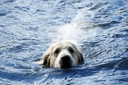 chien noyade