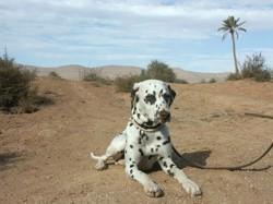 chiens pays chaud