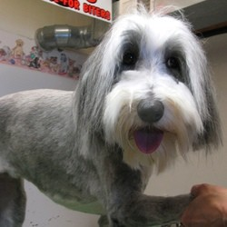 chien toilettage canin
