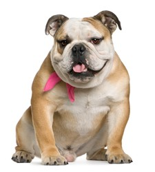 postures du chien