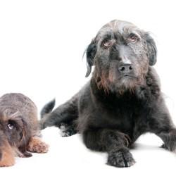Comment savoir si votre chien est malade ? - Soigner son