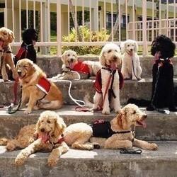 conseils pour bien choisir la race de son chien