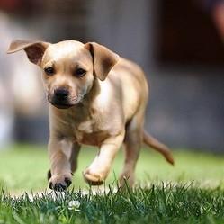 choisir son chien suivant ses qualites psychologiques
