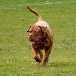Cloture anti fugue pour chien chien fugueur wamiz for Cloture jardin pour chien