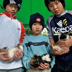 cochon dinde et enfants