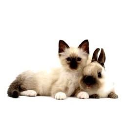 cohabitation chat et lapin