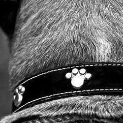 collier pour chien choisir