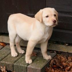 soigner constipation chien soins naturels