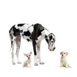 criteres choisir chien