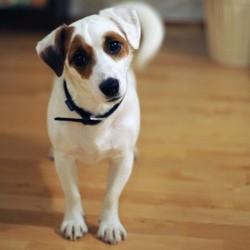 cure detox chien bio