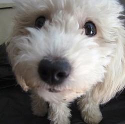 cures renforcer défenses immunitaires chiens