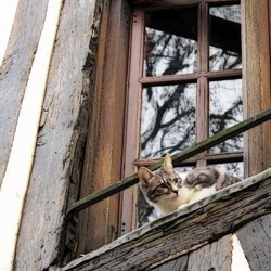 les dangers de la maison pour le chat