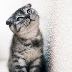 développement neurologique chaton