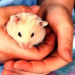 devenir ami hamster