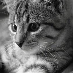 diabète chat