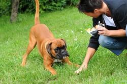 education chien jeu