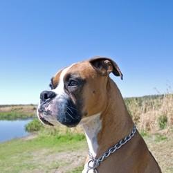 éducation du chien race de chien