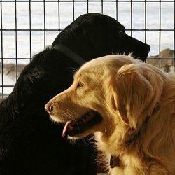 education sexuelle chien