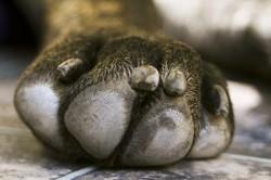 entretien patte chien