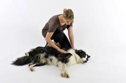 examen du chien