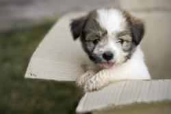 formalite achat chien