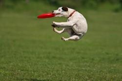 frisbee chien 2
