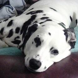 soigner naturellement gastro-entérite chien