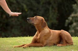 geste eduquer son chien