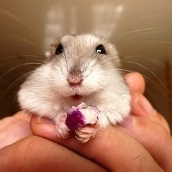 hamster aliments prepares