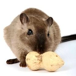 hamster aliments secs