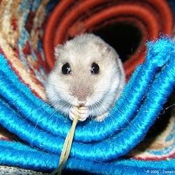 L gumes et fruits pour hamster alimentation du hamster - Peut on donner du riz cuit aux oiseaux ...