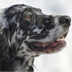 chien - insuffisance renale prevention naturelle
