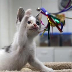 jeu solitaire chaton