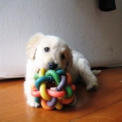 jouets pour chien croissance équilibrée du chien
