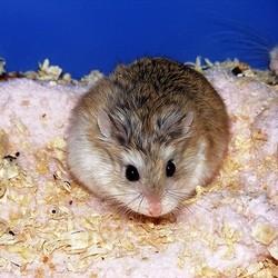 laisser son hamster seul
