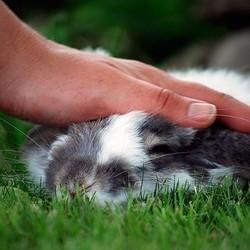 câlin pour lapins
