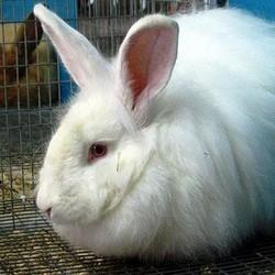 choisir lapin domestique