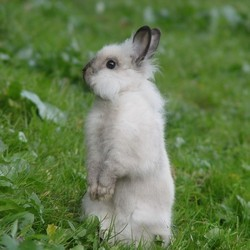le langage des lapins
