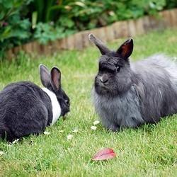 le lapin l 39 ext rieur vivre avec un lapin