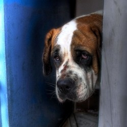 Le chien seul la maison ordres de base wamiz for Petite maison pour chien
