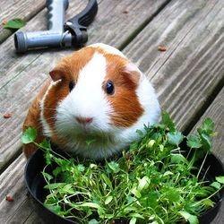 legumes fruits cochon dinde